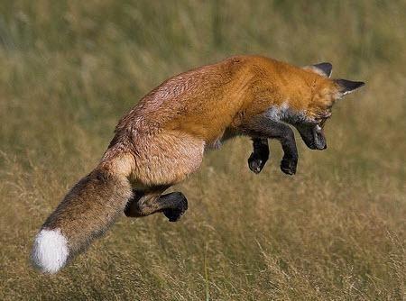 Firefox is fast