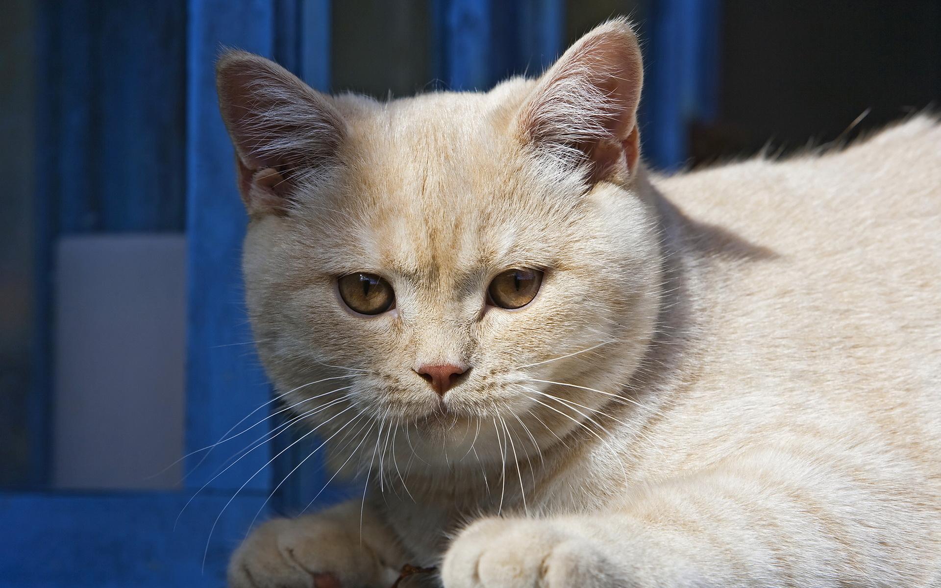 Animals_Cats_Cute_cat_032597_