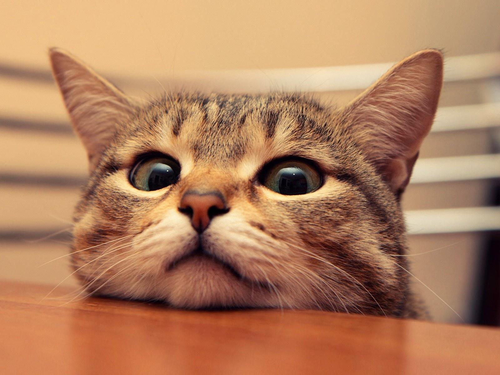 loucos por gatos