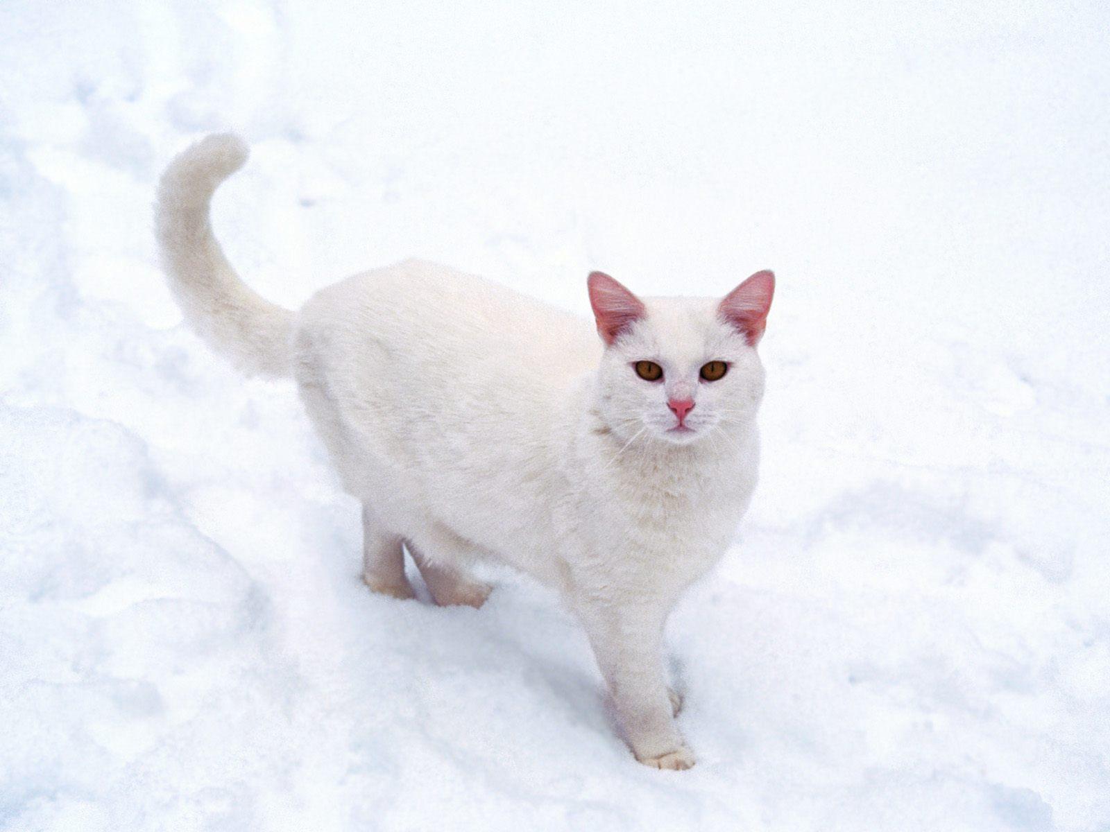 Cute-Cat-cats-13632356-1600-1200