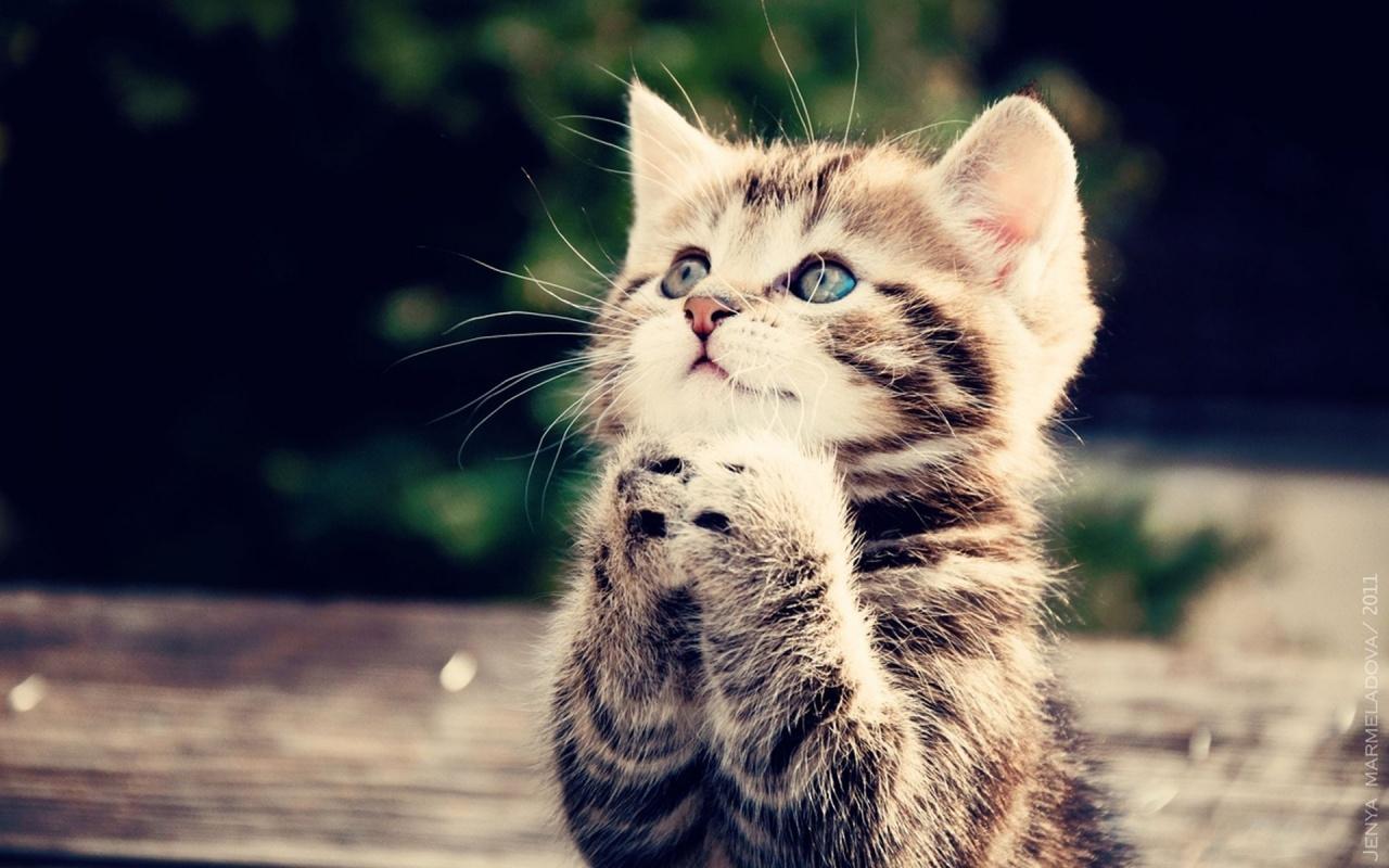 Cute-cats-cats-33440930-1280-800