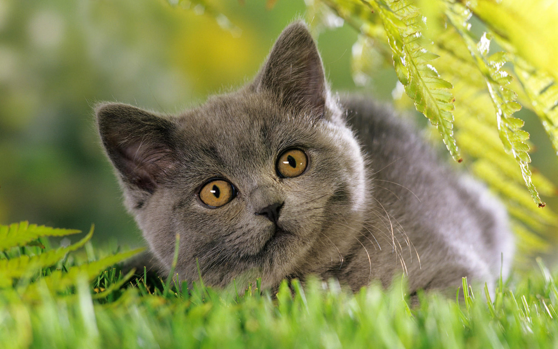 40 Cute Cats Wide Screen Wallpapers