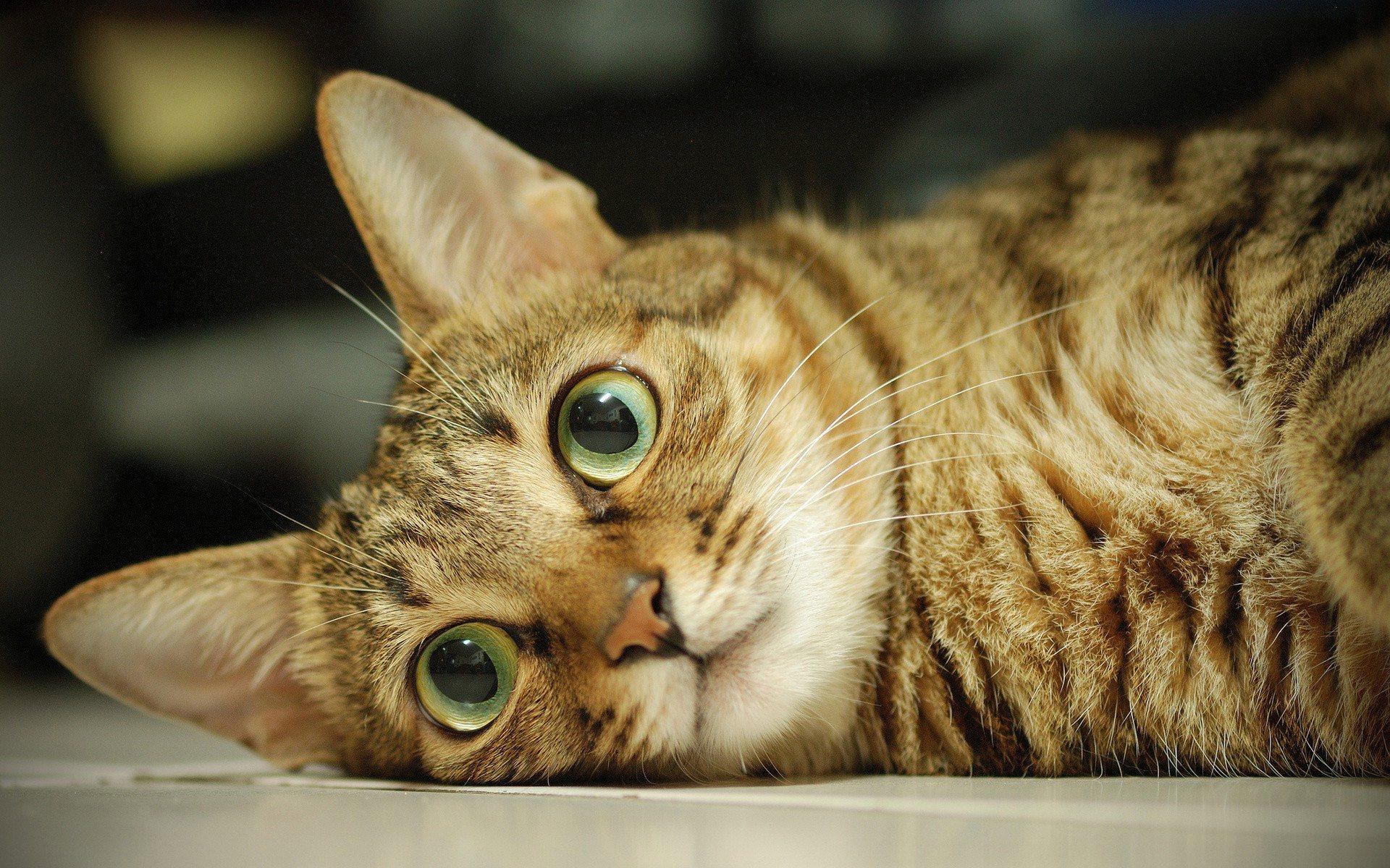 cute-cat-eyes-wallpaper