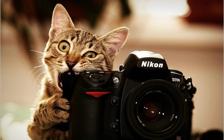 cute-cat-fuuny-image